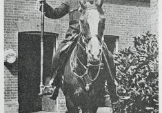 Mounted Section