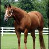 Cruelty to a mare