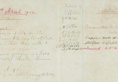 Horses strayed Bishop's Stortford